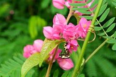 Vite ed insetti confederati Immagine Stock