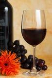 Vite rossa con l'uva rossa Fotografia Stock