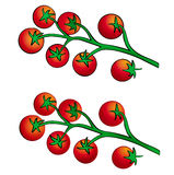 Vite tomato Stock Photo