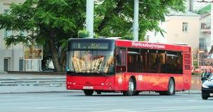 Vitebsk, Wit-Rusland Rood Openbaar Maz Bus Moving On Street in de Zomerdag Pan, Panorama stock video
