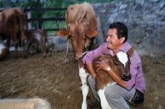 Vitela Colômbia Fotografia de Stock Royalty Free