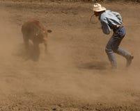 A vitela Roper começ pronta para o laço Fotos de Stock Royalty Free