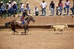 Vitela roping do cowboy foto de stock royalty free