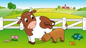 Vitello d'alimentazione della mucca sveglia Fotografia Stock Libera da Diritti