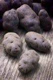 Vitelotte blue-violet potato (Solanum x ajanhuiri Vitelotte Noir Stock Image