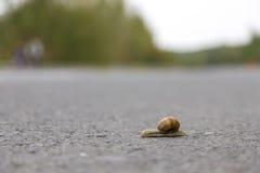 Vitesse d'escargot Photo libre de droits