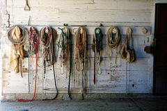 Vitesse de cheval contre le mur de grange Images libres de droits