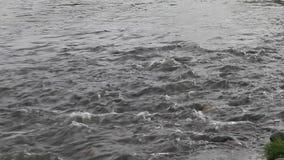 Vitesse de la rivière d'Ibar banque de vidéos