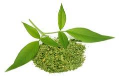 Vitex Negundo or Medicinal Nishinda leaves Stock Images