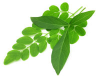Vitex Negundo  with moringa leaves Royalty Free Stock Photo