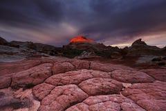 Vitfack, Arizona, USA Fotografering för Bildbyråer