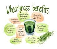 Vitgrass o los wheatgrass, trigo brota el jugo y la información sobre subsidios por enfermedad stock de ilustración