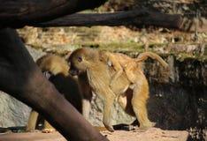 Vith barn för Guinea babian royaltyfri fotografi