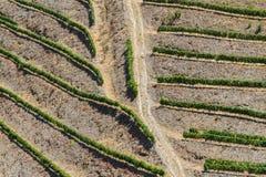 Viti del vino da sopra immagine stock libera da diritti