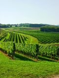 Viti em Borgogna Foto de Stock Royalty Free