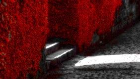 Viti rosse Fotografie Stock Libere da Diritti