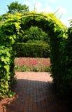 Viti sul traliccio del archway Fotografia Stock