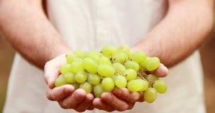Viticoltore sorridente che presenta l'uva verde stock footage