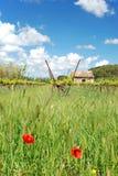 Viticoltura in Francia l'Alsazia Immagine Stock