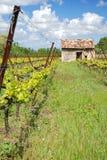Viticoltura in Francia l'Alsazia Immagine Stock Libera da Diritti