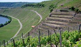 Viticoltura nei pendii ripidi in Germania del sud Fotografie Stock Libere da Diritti