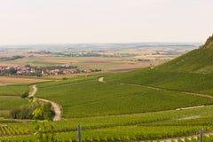 Viticulture photo stock