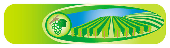 Viticulture banners Stock Photo
