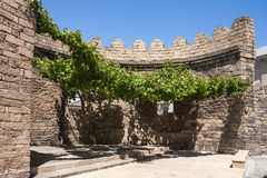 Viticulture de raisin près du mur des tours défensives antiques de la forteresse de la ville de Bakou Photo stock