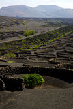 Viticulture  lanzarote s wall crops  cultivation Stock Photo