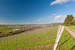 Viticulture Stock Photography