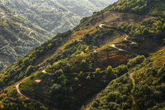 Viticulture Ribeira Sacra Royalty Free Stock Images