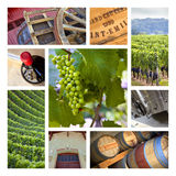 Viticulture Royalty Free Stock Photography