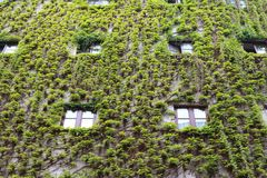 House front covered with wine leaves in the streets of Munich, Germany stock photos
