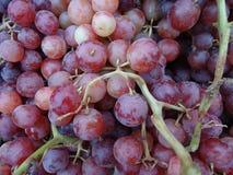 Vitis vinifera 'Flame Seedless' Stock Photo