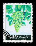 Vitis - vinifera, fruktserie, circa 1962 Royaltyfri Bild