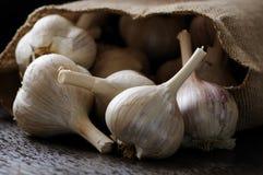 Vitlök - den bästa ingrediensen för att laga mat royaltyfri bild
