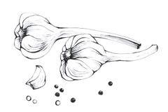 Vitlök Hand dragen svartvit illustrationgrönsak Royaltyfri Foto