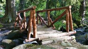 Vitosha φυσικό πάρκο κοντά στη Sofia, Βουλγαρία Η χρυσή περιοχή γεφυρών Τοπίο ρευμάτων νερού απόθεμα βίντεο