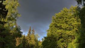 Vitosha-Naturpark nahe Sofia, Bulgarien Das goldene Brückenbereich cloudscape Juni 2013: Geschossen von einem Fahrzeug, welches d stock video