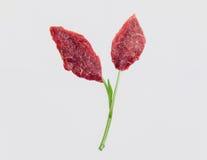 In vitro carne, carne cultivada, carne Laboratório-crescida imagens de stock royalty free