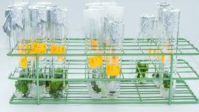 Vitro plant Stock Photo