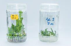 Vitro plant Stock Images