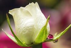 Vitros med Waterdrop refraktion Royaltyfri Bild