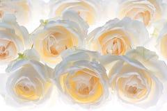 Vitrosblomman blomstrar bröllopbakgrund arkivfoton