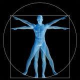 Vitruvian人或人概念性3d比例解剖学身体 免版税库存照片