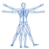 vitruvian人-骨骼 库存图片