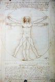 vitruvian图画的人 免版税库存照片