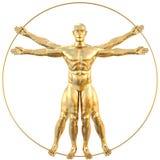 Vitruvian Royalty Free Stock Image