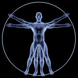 Vitruvian Royalty Free Stock Photo