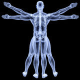 Vitruvian Royalty Free Stock Images